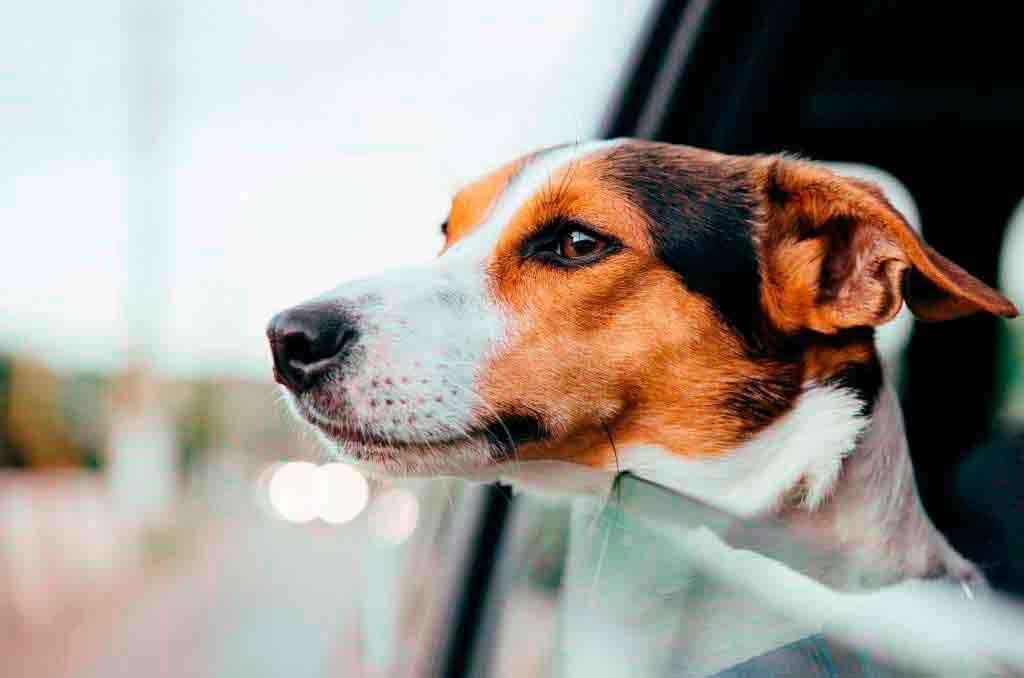 Todo lo que debes saber para viajar este verano con tu mascota