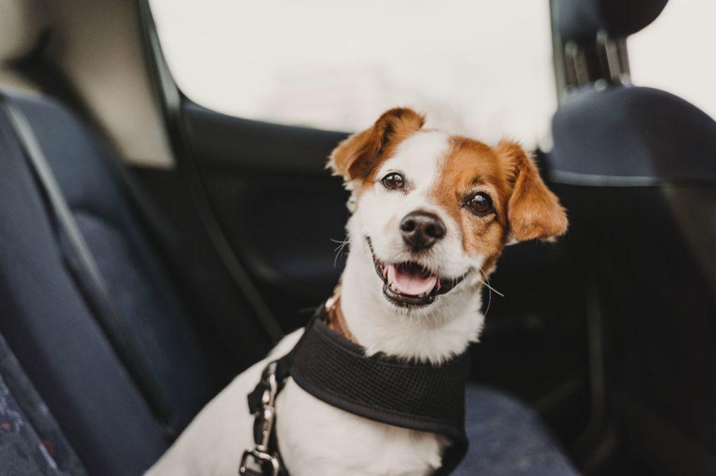 Cómo viajar en coche con tu mascota de forma cómoda y segura